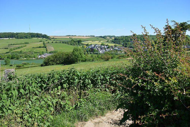 wandelen tussen kleine haagjes Zuid-Limburg