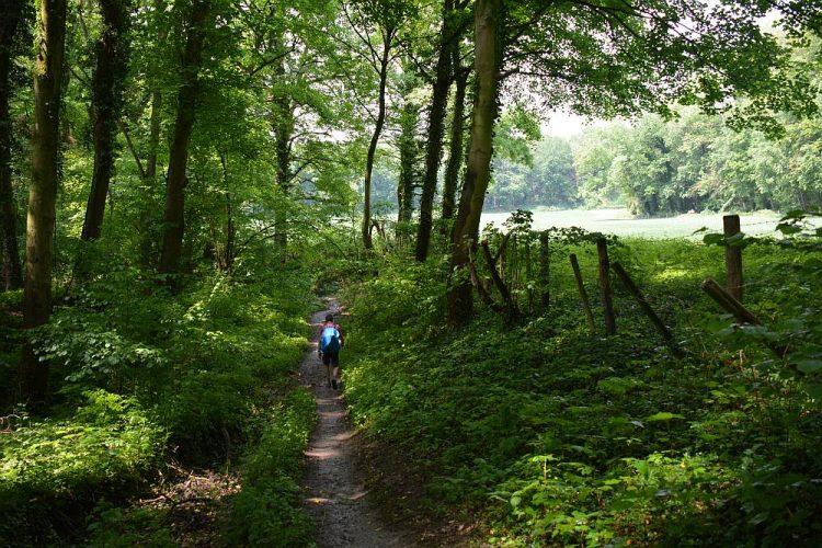 modderig bospad op Dutch Mountain Trail