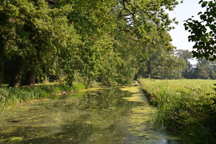 waterpartij in het Donckse Bos